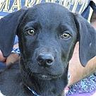 Adopt A Pet :: Puddy