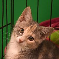 Adopt A Pet :: Clara - Flushing, MI