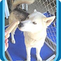 Adopt A Pet :: DAMON - Sebec, ME