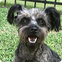 Adopt A Pet :: Mimi - Glastonbury, CT