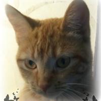 Adopt A Pet :: Atlantis - Owatonna, MN