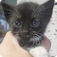 Adopt A Pet :: Gru - Lincolnton, NC