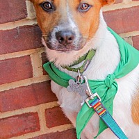 Adopt A Pet :: Lizzie - Washington, DC