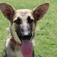 Adopt A Pet :: Louise - Fresno, CA