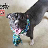 Adopt A Pet :: Panola - Lonely Heart - Gulfport, MS
