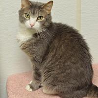 Adopt A Pet :: Rainier170031 - Atlanta, GA