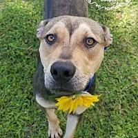 Adopt A Pet :: Jasper - Gautier, MS