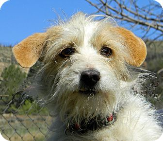 Terrier (Unknown Type, Medium) Mix Dog for adoption in Mountain Center, California - Melody