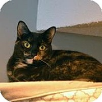 Adopt A Pet :: Enya - Centreville, VA