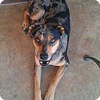 Adopt A Pet :: Rex - Conway, AR