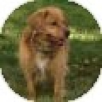 Adopt A Pet :: Dooley - Denver, CO