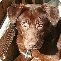 Adopt A Pet :: Billy(ADOPTED!) - Chicago, IL