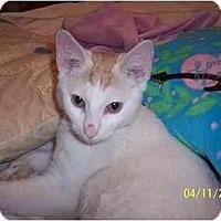 Adopt A Pet :: Buddy - Jenkintown, PA