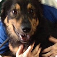 Adopt A Pet :: ADMIRAL - Glastonbury, CT