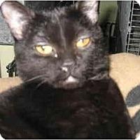 Adopt A Pet :: Montana - Mission, BC