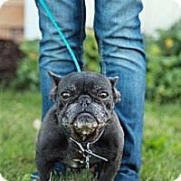Adopt A Pet :: Chance - Lancaster, OH