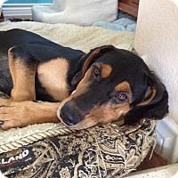 Adopt A Pet :: Minnie - Dallas, TX