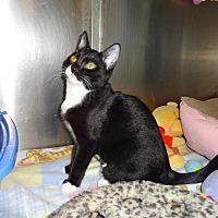 Adopt A Pet :: Harriett - Salt Lake City, UT