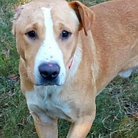 Adopt A Pet :: Evander - Enfield, CT