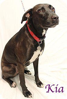 Mixed Breed (Large) Mix Dog for adoption in Bradenton, Florida - Kia
