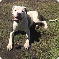Adopt A Pet :: Iffy - Newport, NC