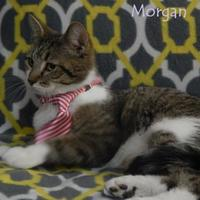 Adopt A Pet :: MORGAN - Bucyrus, OH