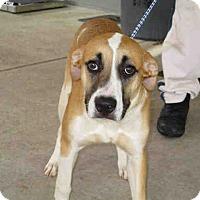 Adopt A Pet :: Archie - Newnan City, GA
