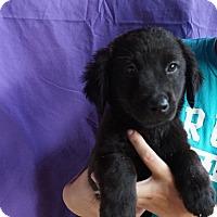 Adopt A Pet :: Alexia - Oviedo, FL