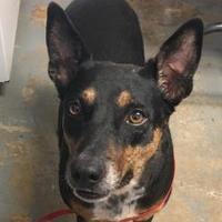Mixed Breed (Large) Mix Dog for adoption in Brownwood, Texas - Sasha