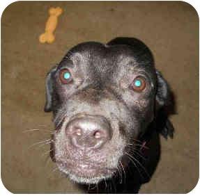Labrador Retriever Mix Dog for adoption in San Clemente, California - TAMMEE