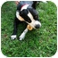 Photo 3 - American Pit Bull Terrier Mix Dog for adoption in Cincinnati, Ohio - Lulu - Courtesy Post