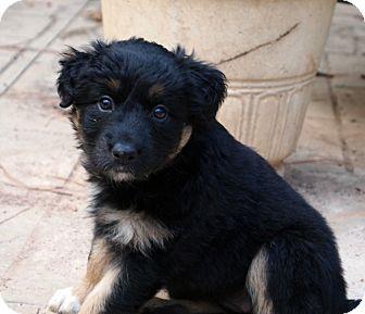 Labrador Retriever Mix Puppy for adoption in Marietta, Georgia - Geranium