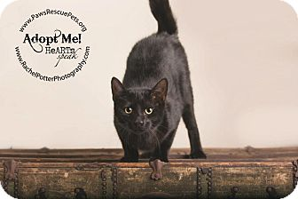 Domestic Mediumhair Kitten for adoption in Redwood, Mississippi - Salem