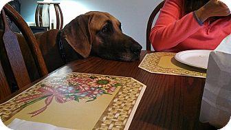 Great Dane Dog for adoption in Nicholasville, Kentucky - Guy