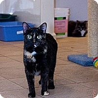 Adopt A Pet :: Chrissy - Columbia, MD