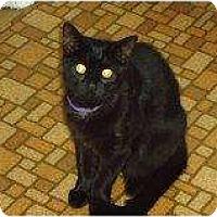 Adopt A Pet :: Cassandra - Riverside, RI