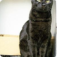Adopt A Pet :: Raven - Toledo, OH