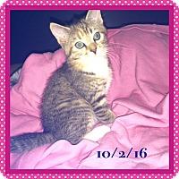 Adopt A Pet :: Jelly Bean - Adoption Pending! - Colmar, PA