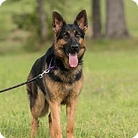 Adopt A Pet :: Lucy - Dacula, GA