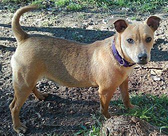 German Shepherd Dog Mix Puppy for adoption in Austin, Texas - Little Jane