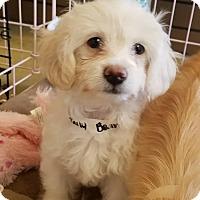 Adopt A Pet :: JELLYBEAN - Inland Empire, CA