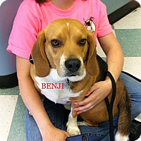 Adopt A Pet :: BENJI - Ventnor City, NJ
