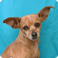 Adopt A Pet :: Tiffany - Palmdale, CA
