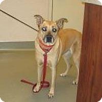 Adopt A Pet :: Kirby - Wildomar, CA