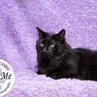 Adopt A Pet :: 2439 - Lake City, MI