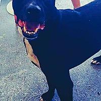 Adopt A Pet :: Jameson - Wichita, KS