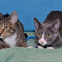 Adopt A Pet :: Isabella & Sweet Pea - Lenexa, KS