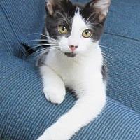 Adopt A Pet :: Roxy - Glenwood, MN