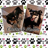 Adopt A Pet :: Chester & Maddie - Snyder, TX