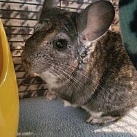 Adopt A Pet :: Asher - Lindenhurst, NY